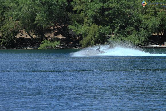 Hydro Attack Queenstown