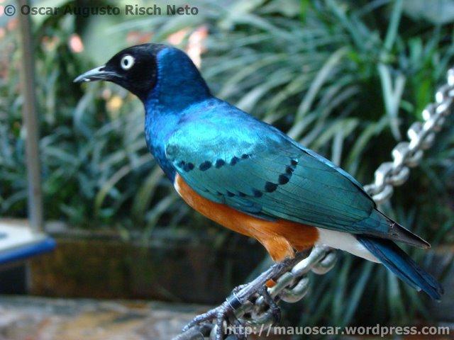 Jurong BirdPark ..