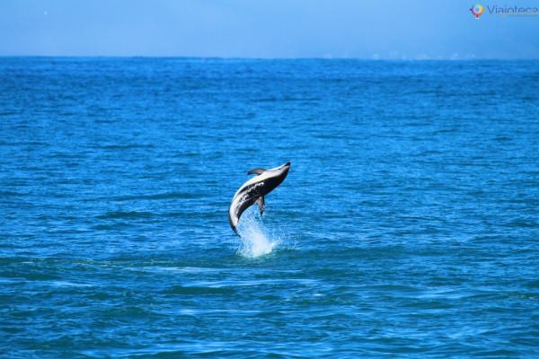 Acrobacia dos Golfinhos na Nova Zelândia