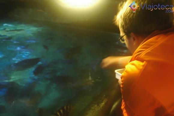 Alimentando os peixes no Aquário de Auckland
