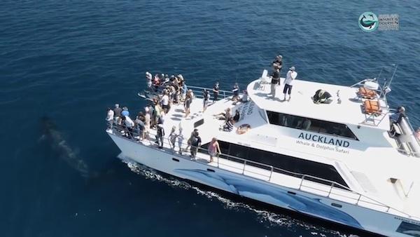 Golfinhos em Auckland (Foto promocional)