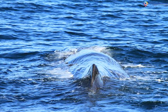 Baleias Nova Zelândia (19)