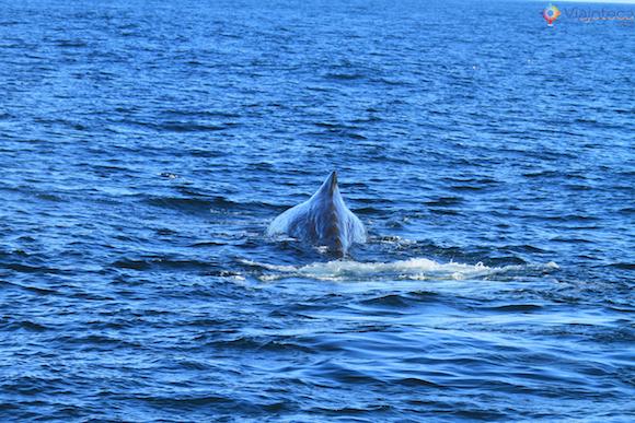 Baleias Nova Zelândia (23)
