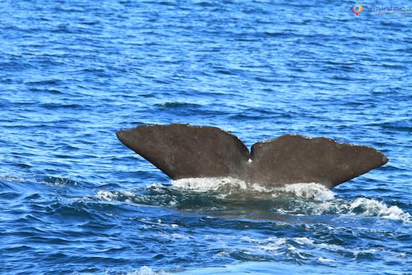Baleias Nova Zelândia (32)