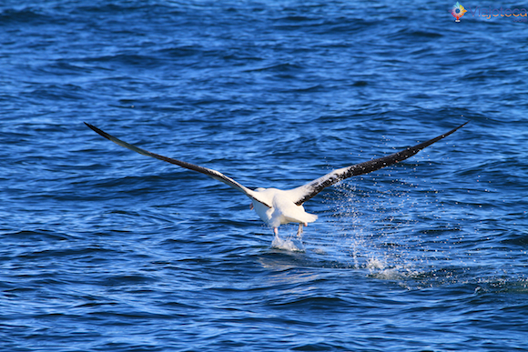 Baleias Nova Zelândia (9)