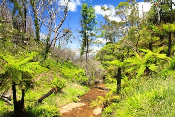 Blue Mountains Austrália 56