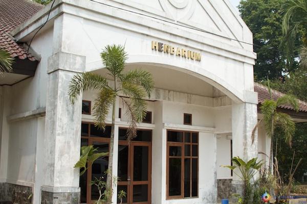 herbaria Jardim Botânico de Bogor na Indonésia