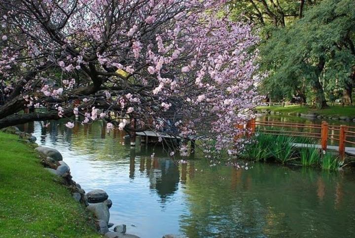Florada das cerejeiras em Buenos Aires