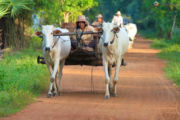 Cambodia Quad Bike (14)