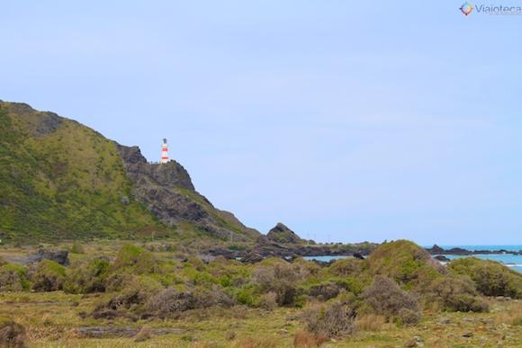 Cape Palisser na Wairarapa Coast nos arredores de Wellington