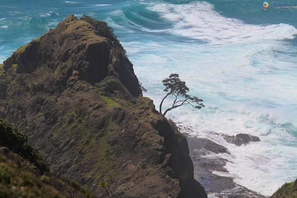 Cape Reinga Nova Zelândia 29