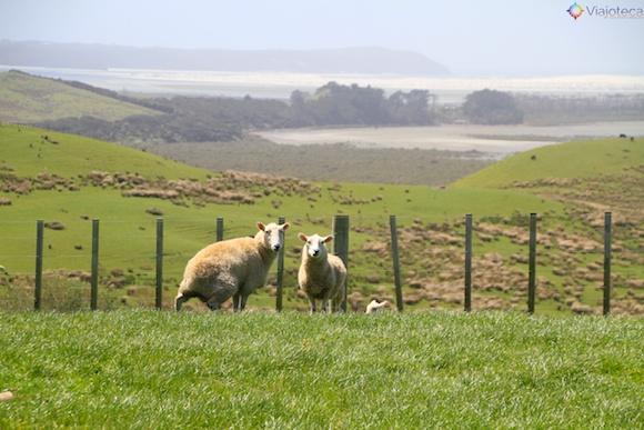 Cape Reinga Nova Zelândia 8