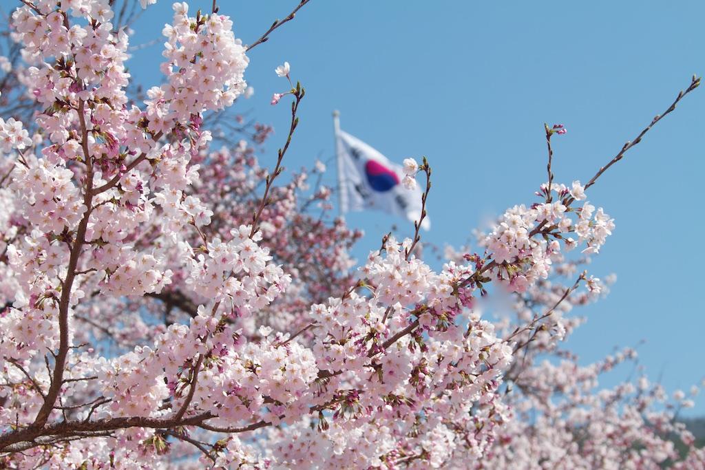 Florada Cerejeiras na Coreia do Sul