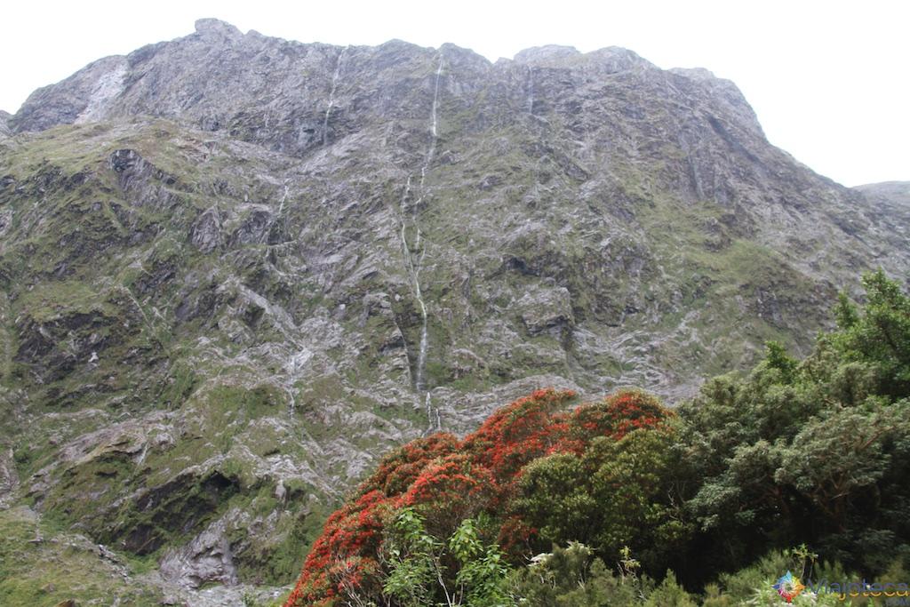 Estrada para o Milford Sound na Nova Zelândia 114