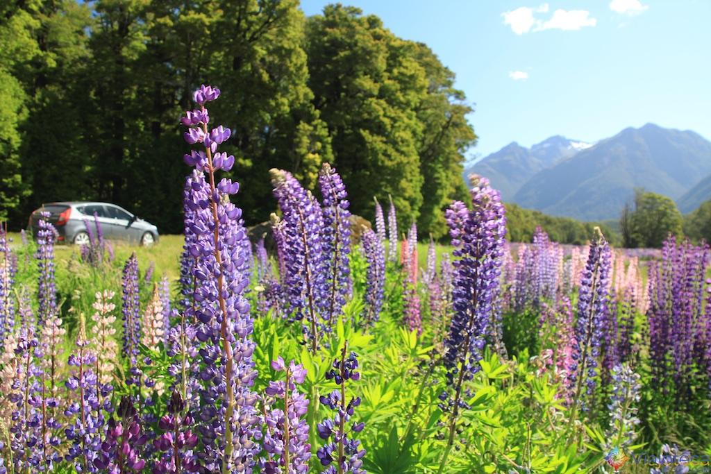 Estrada para o Milford Sound na Nova Zelândia 140