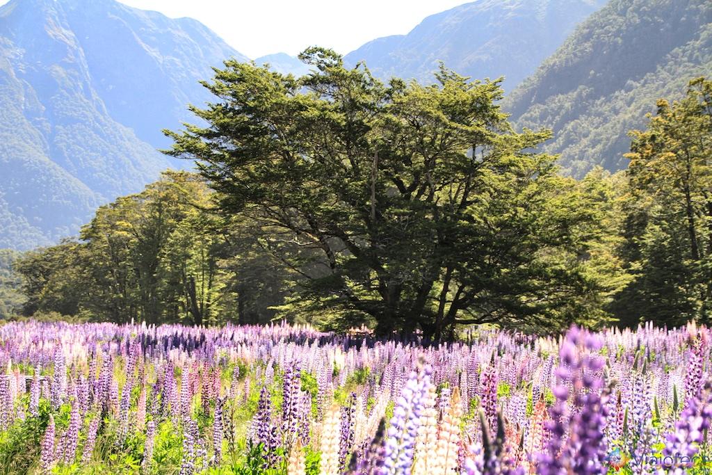 Estrada para o Milford Sound na Nova Zelândia 143