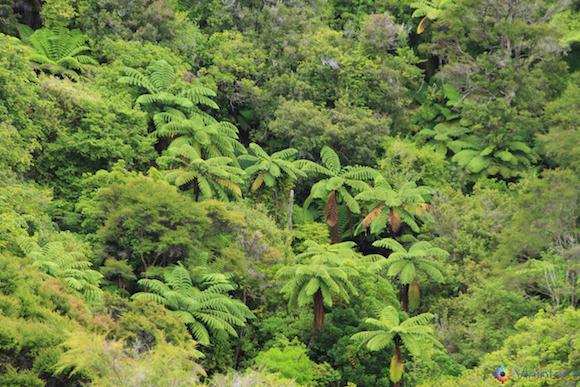 Fern Trees no Abel Tasman National Park na Nova Zelândia