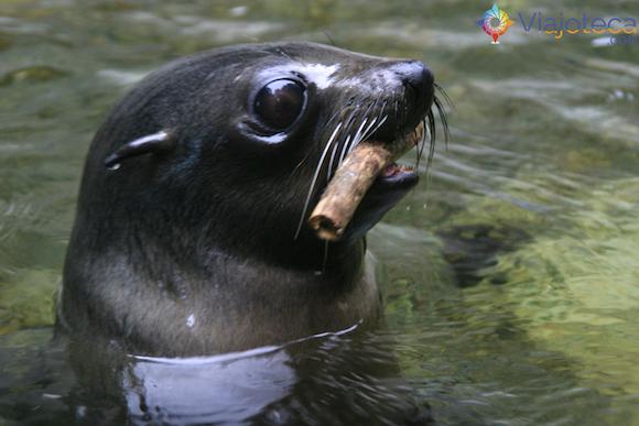 Filhotes de Leão Marinho Cascata em Kaikoura (18)