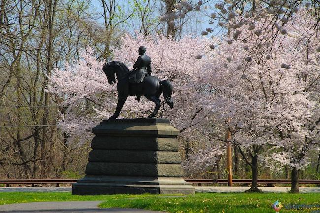 Florada Cerejeiras Philadelphia