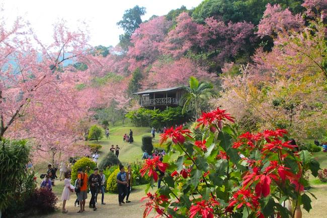 Florada das Cerejeiras pelo Mundo