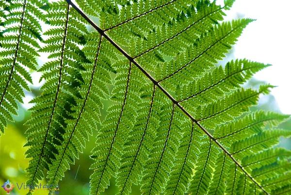 Floresta de Sequóias em Rotorua 21