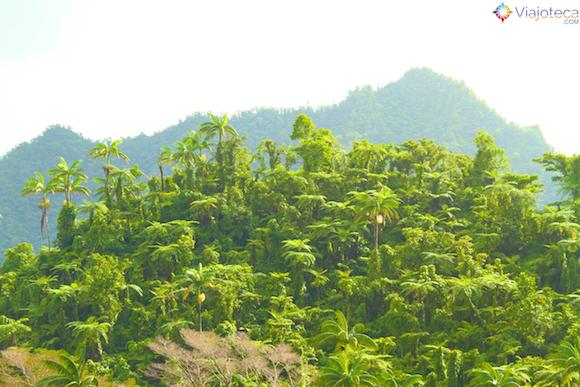 Floresta em Samoa
