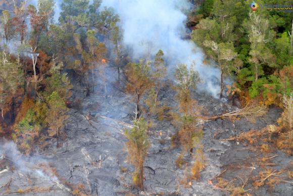 Floresta sendo consumida pela lava do Kilauea .jpg