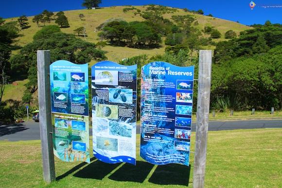 Goat Island o melhor snorkel e mergulho em Auckland 26