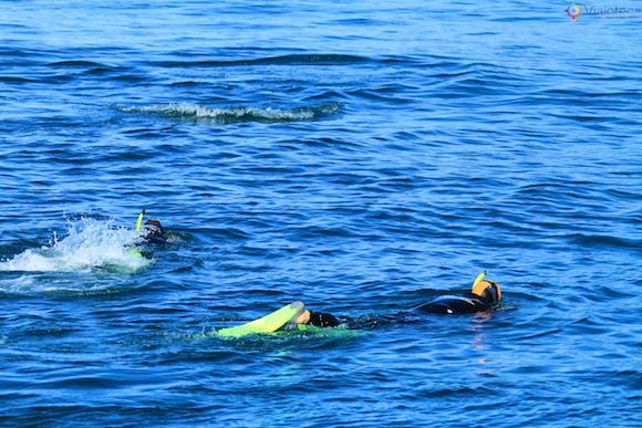 Golfinhos na Nova Zelândia - Kaikoura Dusky 11
