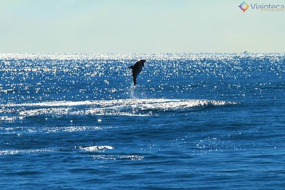 Golfinhos na Nova Zelândia - Kaikoura Dusky 20
