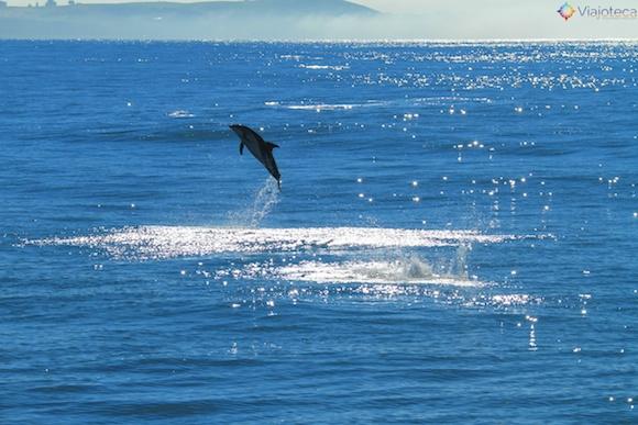 Golfinhos na Nova Zelândia - Kaikoura Dusky 23