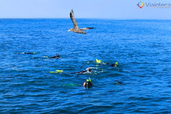 Golfinhos na Nova Zelândia - Kaikoura Dusky 29