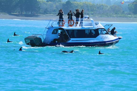 Observação golfinhos na Nova Zelândia