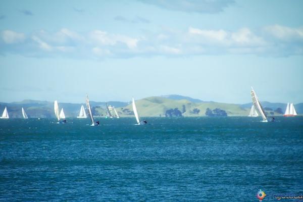 Veleiros na Waitemata Harbour