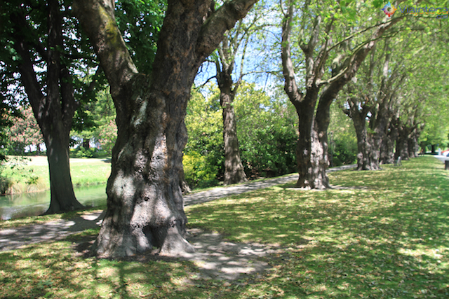 Jardim Botânico de Christchurch na Nova Zelândia (3)