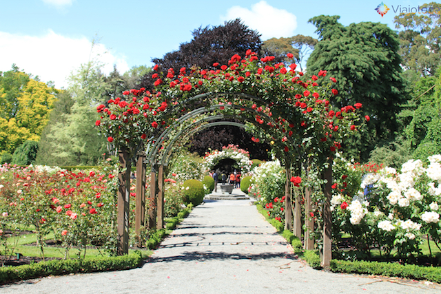 Jardim Botânico de Christchurch na Nova Zelândia (39)
