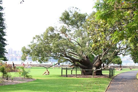 Jardim Botânico de Sydney17
