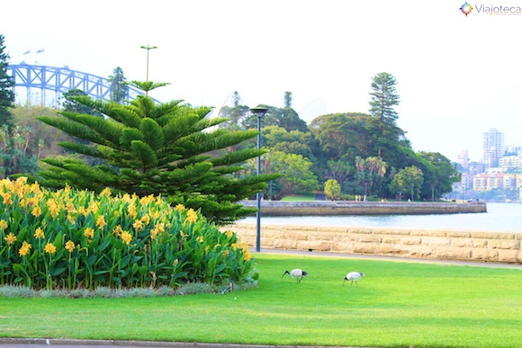 Jardim Botânico de Sydney34
