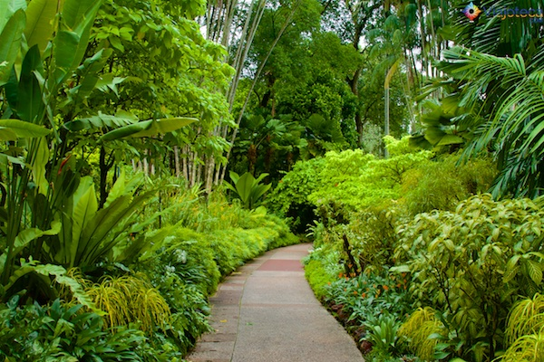 Jardim Nacional das Orquídeas de Singapura 230