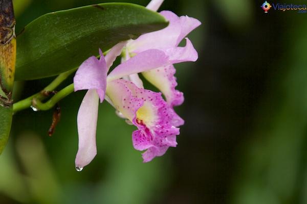 Jardim Nacional das Orquídeas de Singapura 232