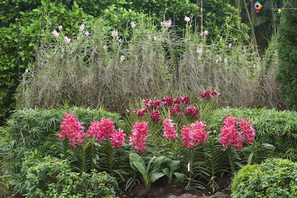 Jardim Nacional das Orquídeas de Singapura 233
