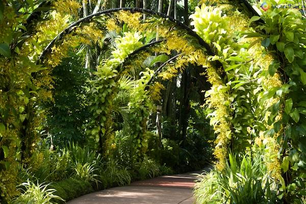 Jardim Nacional das Orquídeas de Singapura 252