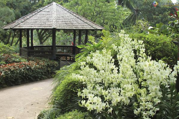 Jardim Nacional das Orquideas de Singapura (31)