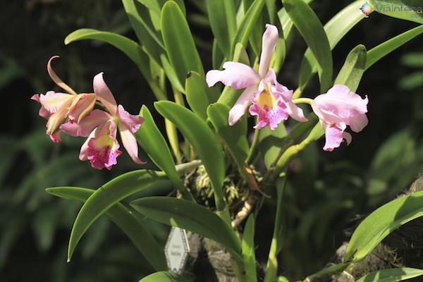 Jardim Nacional das Orquideas de Singapura (60)