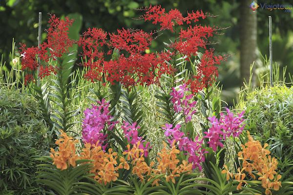 Jardim Nacional das Orquideas de Singapura (70)