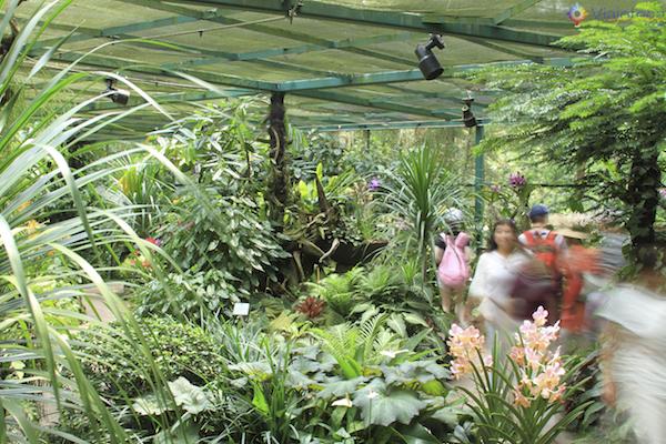 Jardim Nacional das Orquideas de Singapura (89)