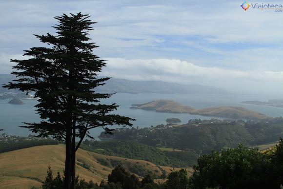 Larnach Castle o único castelo da Nova Zelândia (43)