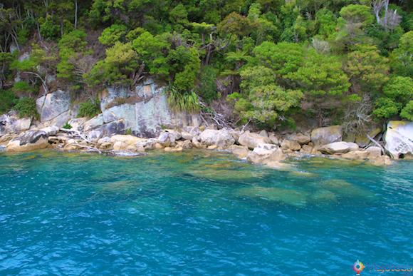 Lugar ótimo para Snorkel em Abel Tasman National Park na Nova Zelândia