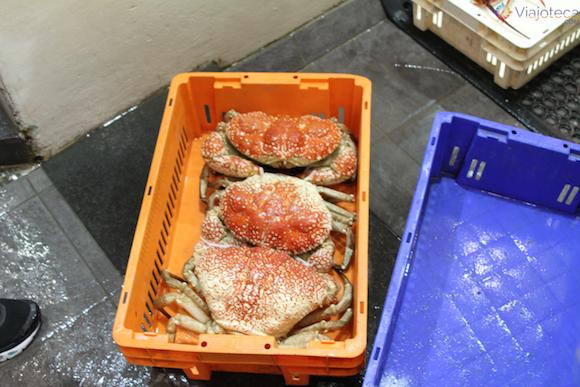Mercado Peixe de Sydney (12)