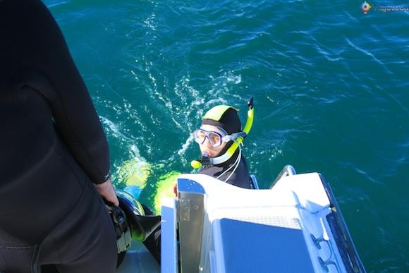 Mergulho com Golfinhos na Nova Zelândia - Kaikoura Dusky